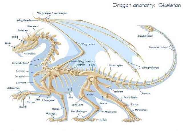 Anatomy Naga...
