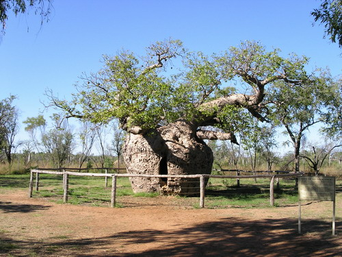 Pohon Boab Prison