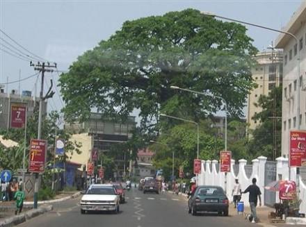 Pohon Kapas