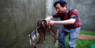 Yang Hongchang, pelopor peternakan ular di Zisiqiao, China...